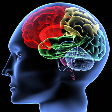 Tỏi đen cải thiện hệ thống thần kinh và bộ nhớ